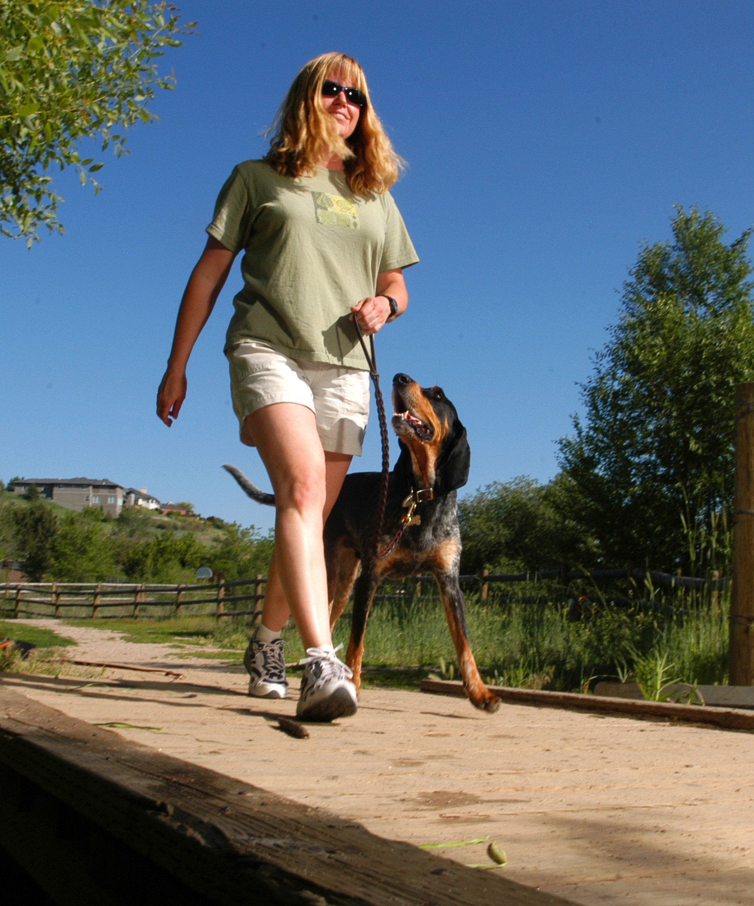Precision K-9 :: Dog Training :: Boise Idaho ::